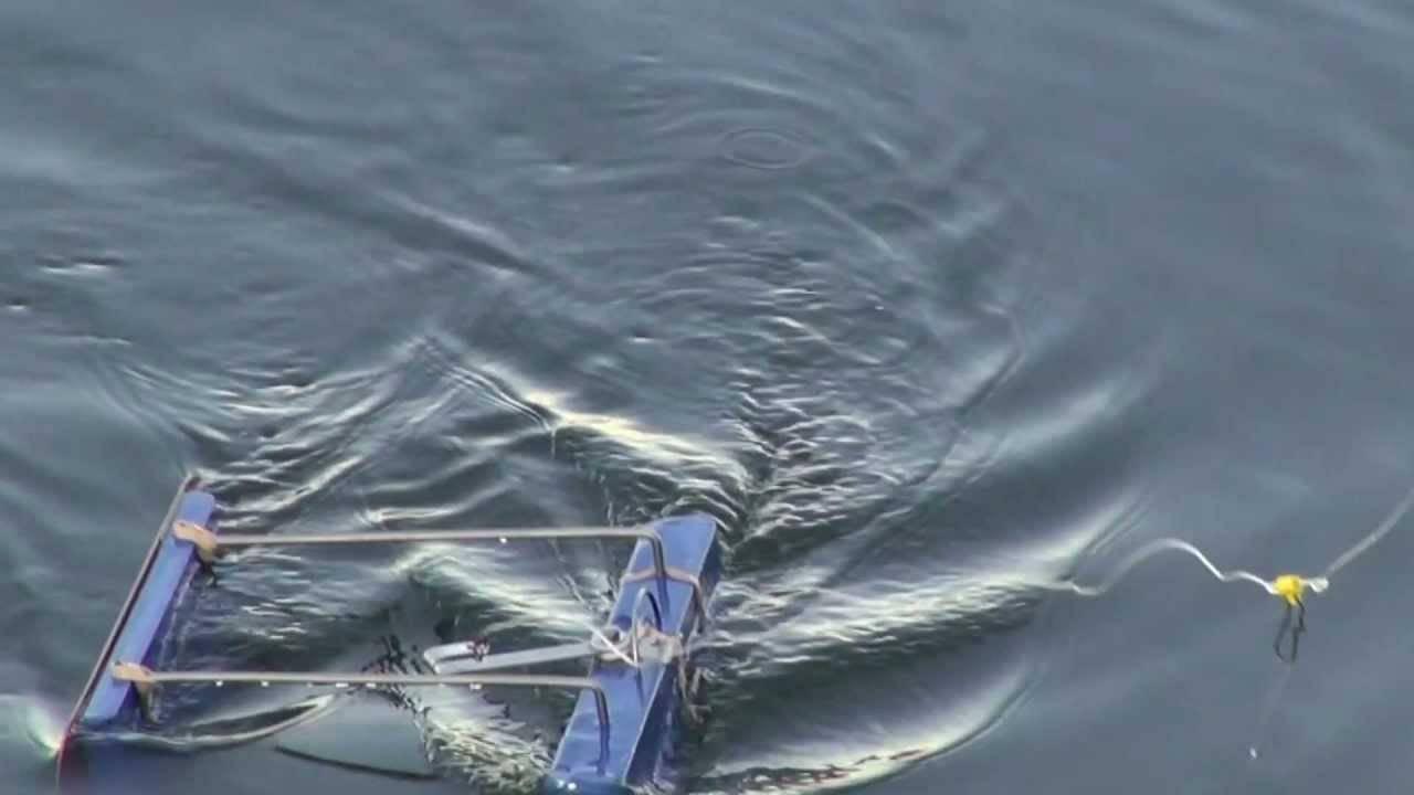 Ловля на кораблик или маленькие хитрости поверхностного ужения