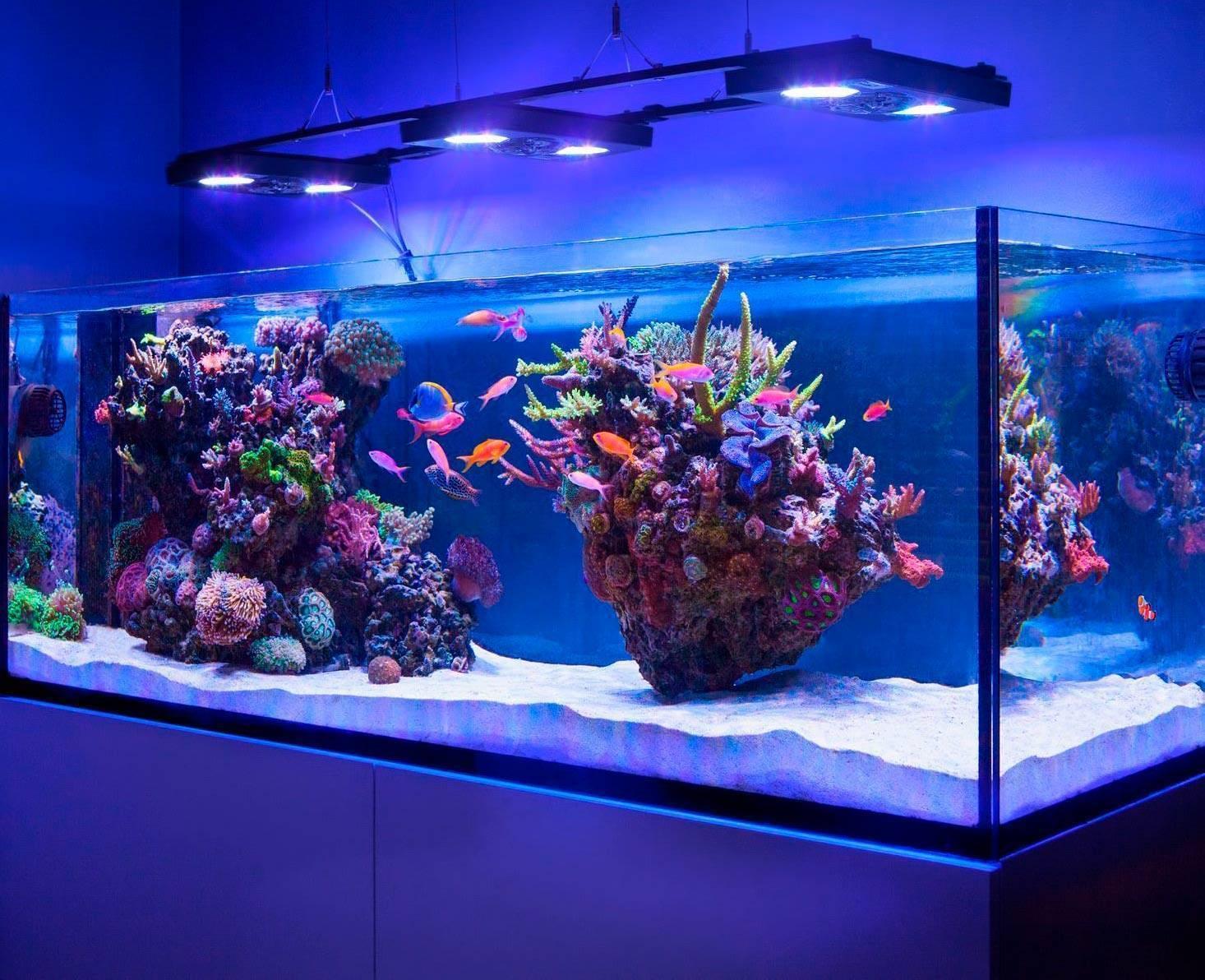 Какой аквариум лучше выбрать и купить?