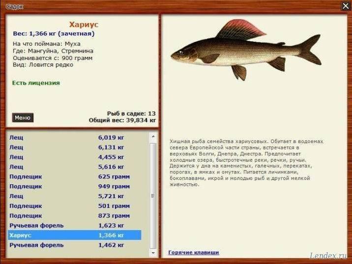 4 основных правила как ловить большую рыбу!
