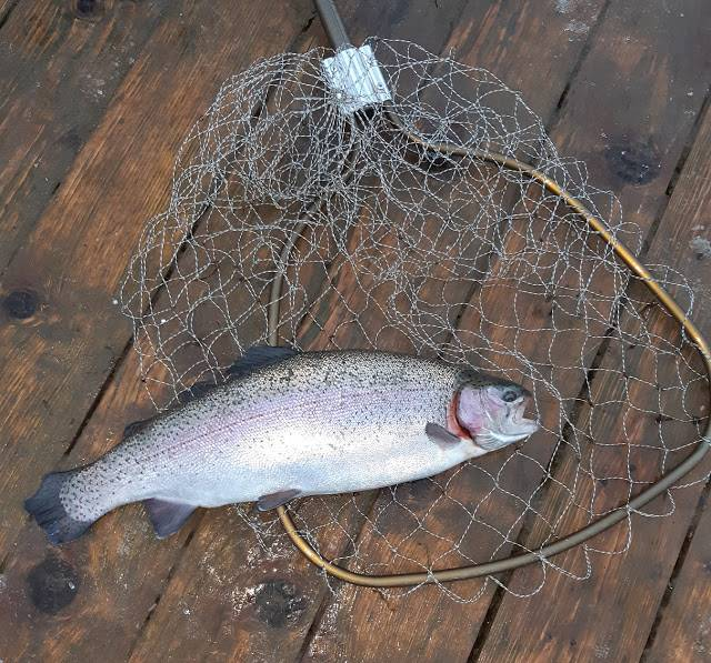 Рыбалка в орловской области и орле: платная и бесплатная ловля рыбы
