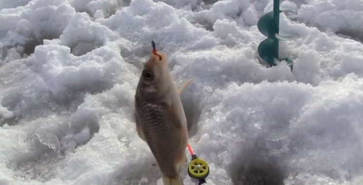 Зимняя рыбалка на карася - где, на что и как ловить