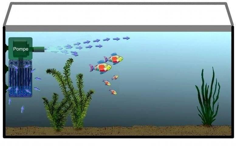 Как правильно выбрать и как использовать помпу в аквариуме