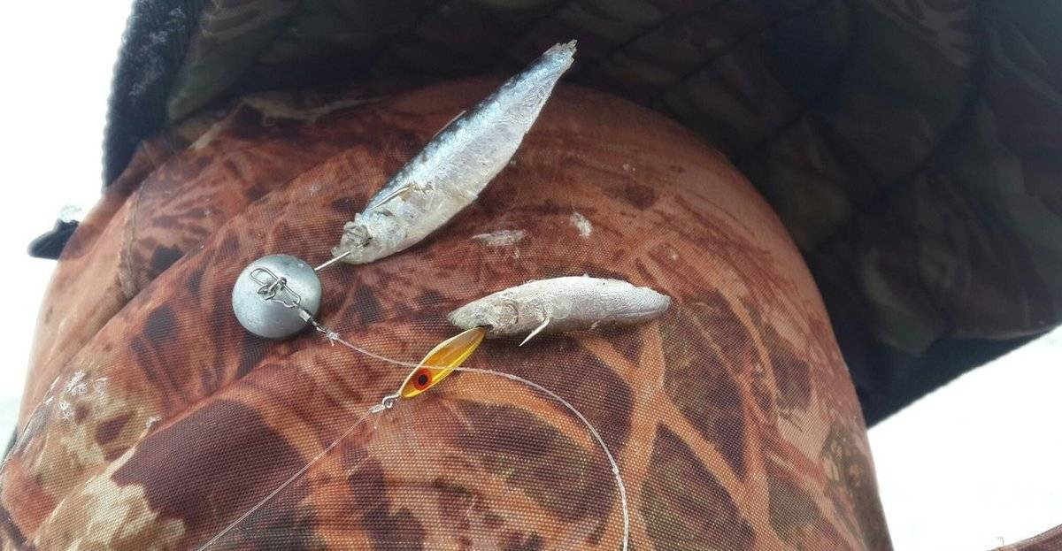 Ловля судака зимой на тюльку: оснастка, тактика ловли, снасти - рыбакmak