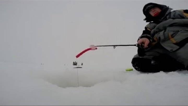 Ловля берша зимой на тюльку: как выбрать снасти?