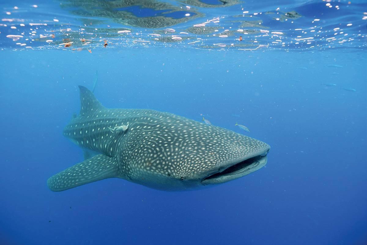 Самые большие рыбы в мире - топ 10