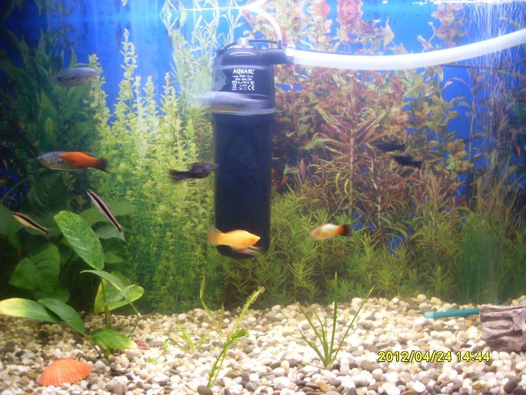 Почему цветет аквариум и как с этим бороться?