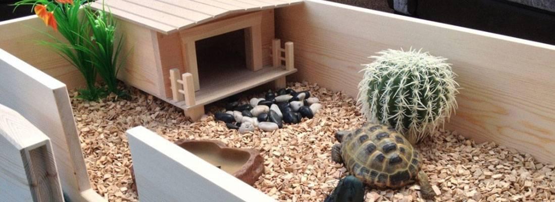 Акватеррариумы для красноухой черепахи: как обустроить, что нужно, оформление, грунт, вода, аквариум, растения, освещение, обогрев, вентиляция, декорирование, условия, что запрещено, соседство