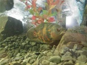 Какая рыба зимой спит. зимовка рыбы. что стоит знать о зимовке