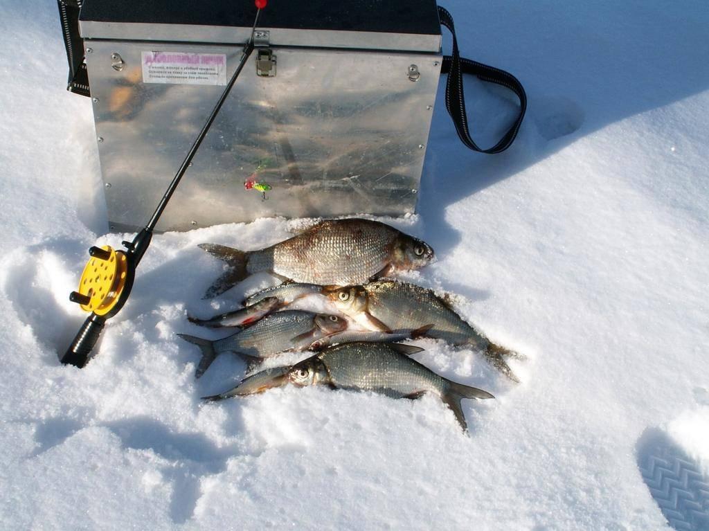 Рыбалка на волге весной - читайте на сatcher.fish