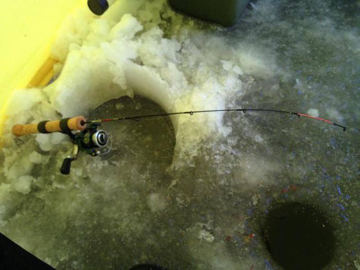 Ловля леща зимой – снасти, наживки и прикормка [2019]