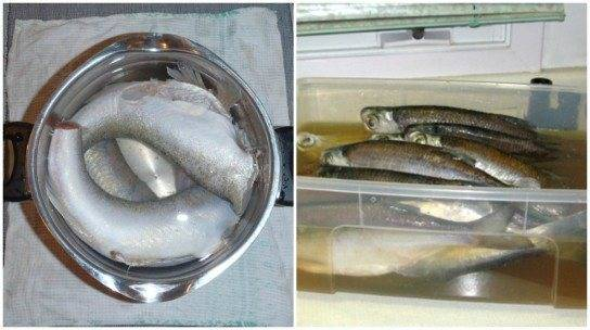 Как хранить вяленую рыбу: 5 рекомендаций специалистов