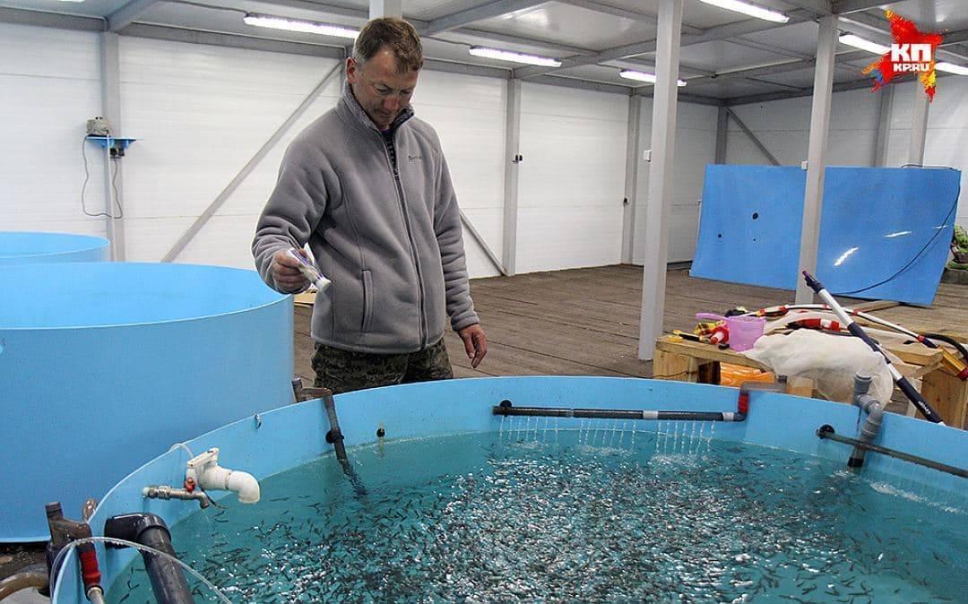 Как открыть бизнес по разведению рыбы: подробный план + расчёты