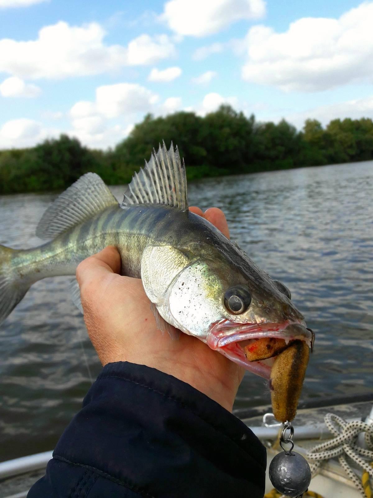 Летняя рыбалка со спиннингом – окунь на микроджиг - рыбалка на ахтубе с комфортом - база трёхречье