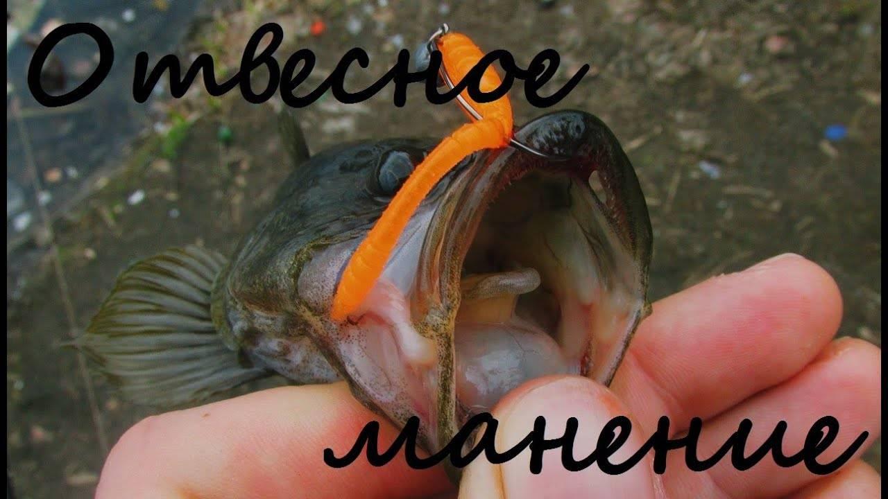 Рыба ротан: фото и описание, съедобная или нет, как выглядит, разница с бычком