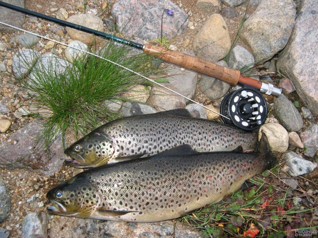 Firstfisher.ru – интернет-журнал о рыбалке и рыболовах.  рыбалка на кольском полуострове