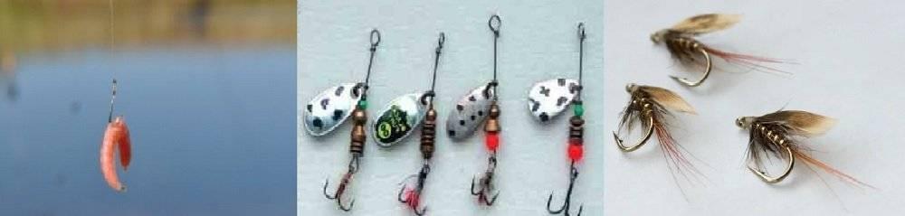 Ловля ельца осенью — общие принципы поимки этой рыбы ' рыбалка '