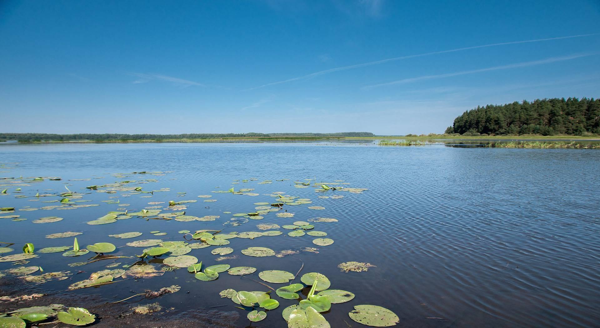 Озеро круглое в московской области: рыбалка, как доехать, базы отдыха