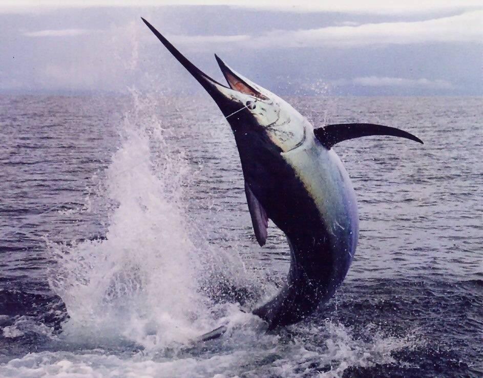 Рыба минога: что это, как выгядит, где водится и чем питается