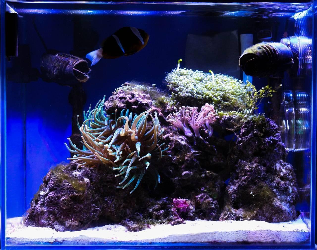 Пошаговый процесс запуска аквариума для новичков