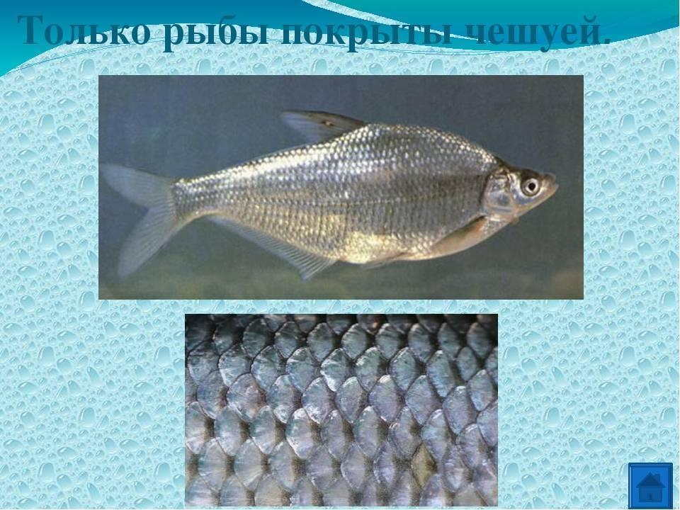 Рыба с красными плавниками (речная): как называется, где водится, виды