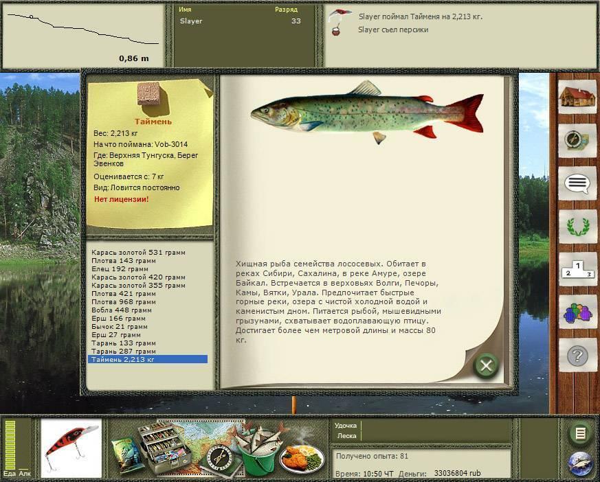 Ловля тайменя на спиннинг – рыбалке.нет