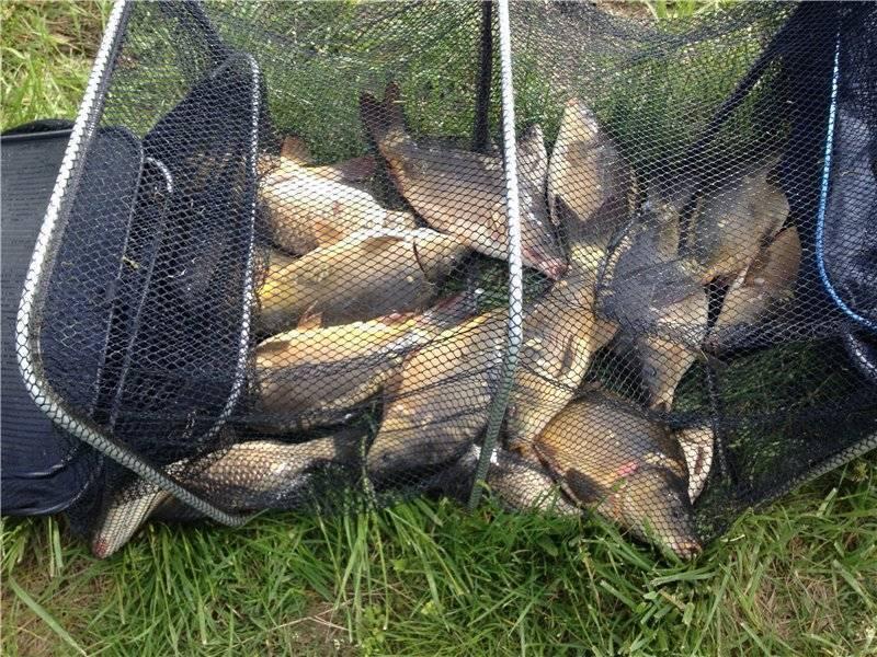 Ставрополь - календарь рыболова. рыбалка в ставрополе, график клёва рыбы.
