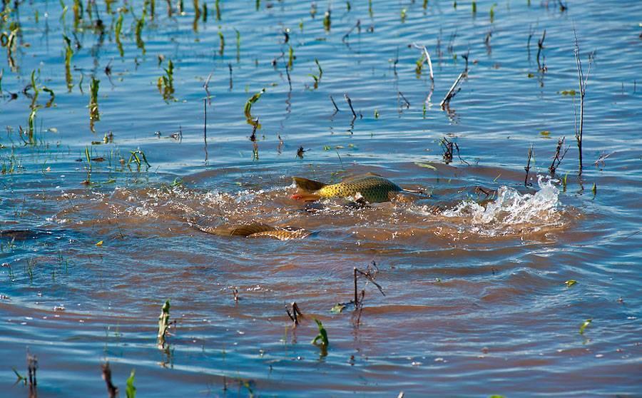Нерест рыбы. когда какая рыба нерестится? рыбалка в нерест: штрафы