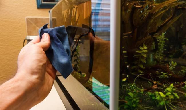 Как почистить аквариум в домашних условиях: порядок действий и подручные средства