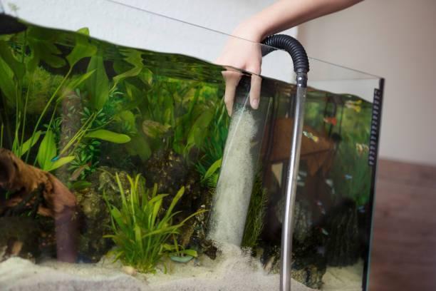 Как часто и как надо промывать аквариумный фильтр?