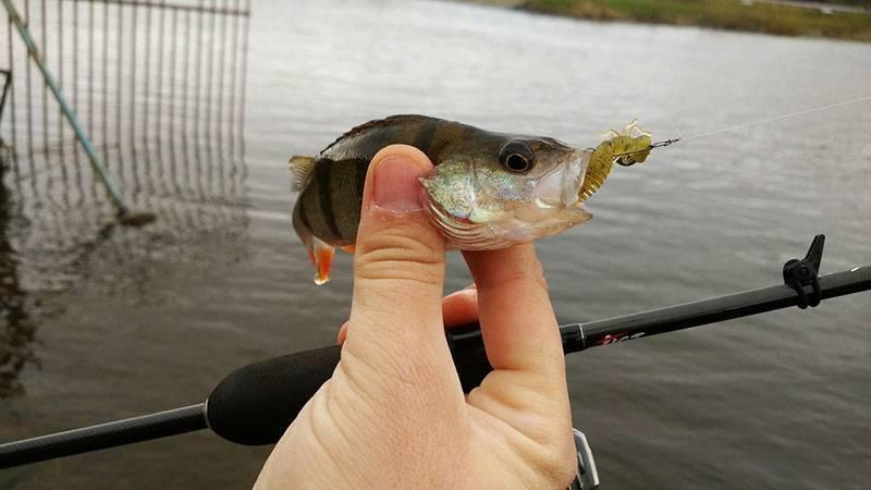 Ловля окуня на отводной поводок - видео ловли осенью, весной и летом, монтаж оснастки