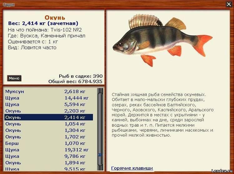 Нильский окунь: самый большой речной окунь в мире, рыбалка на африканском континенте