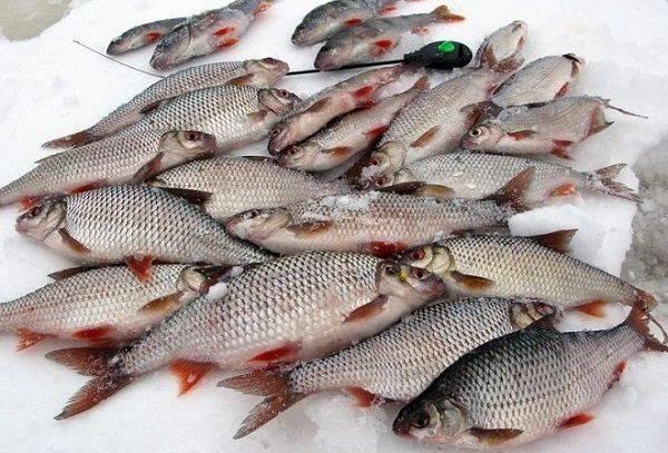 Обзор рыбных баз в пудышах на яузском водохранилище