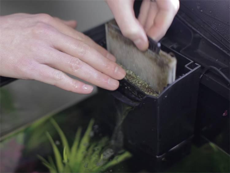 Как разобрать фильтр акваэль фан 2. как чистить аквариумный фильтр? что вам понадобится