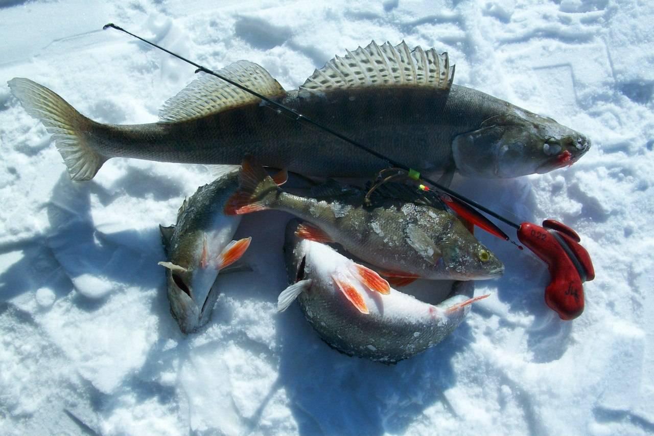 Рыбалка в карелии осенью