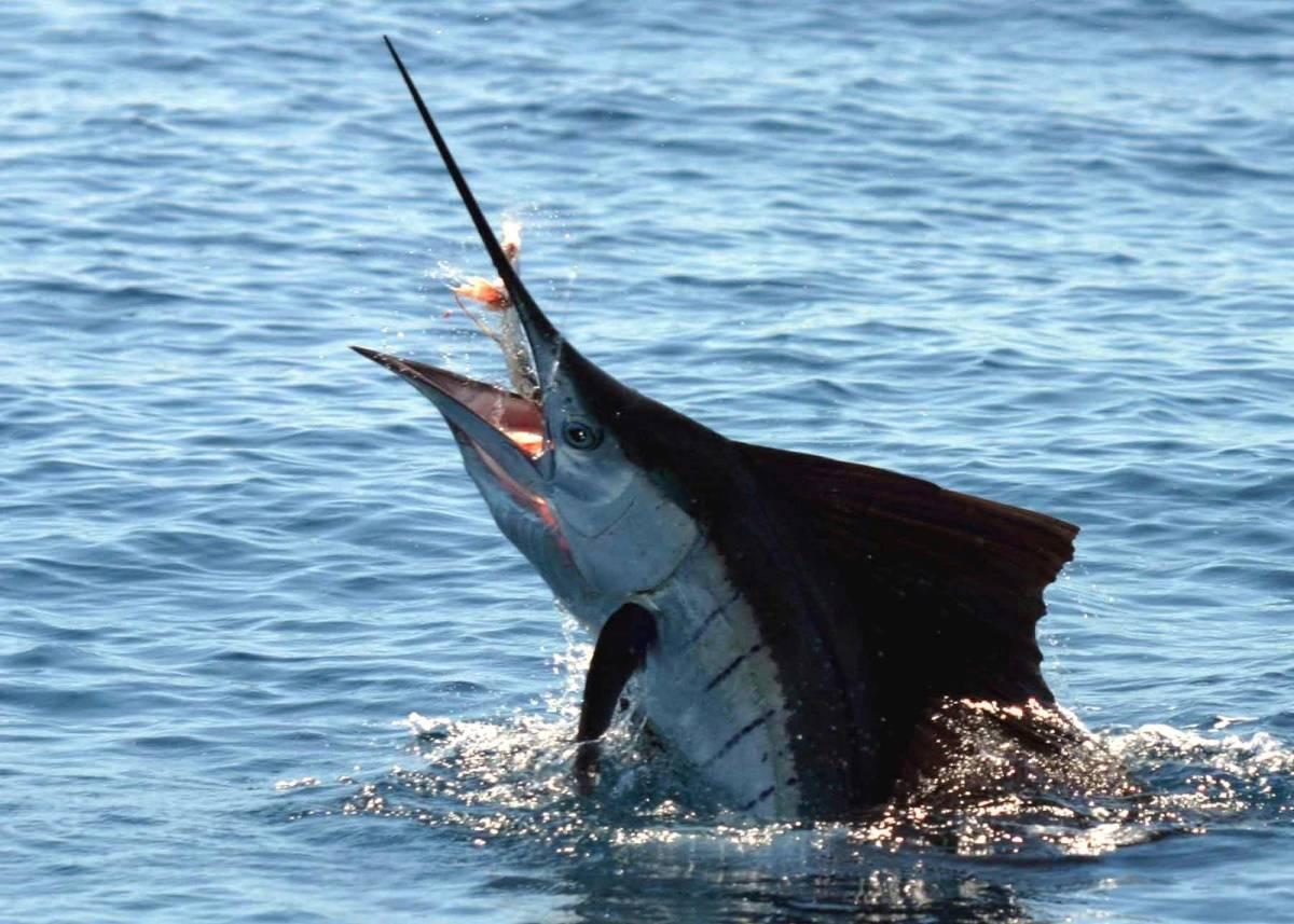 Рыба линь: характеристики, образ жизни, как ловить и рыбный бизнес