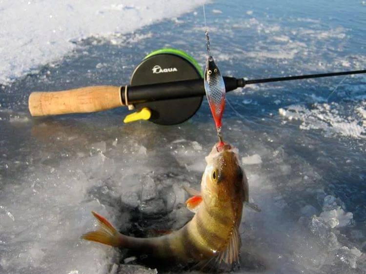 Ловля окуня зимой на балансир. Раскачка лунки и проводка