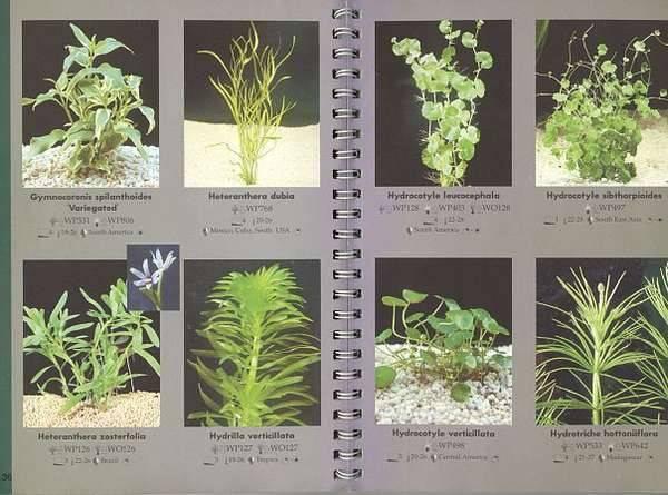 Неприхотливые аквариумные растения: список и содержание