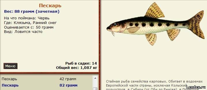 Пескарь: на что клюет, особенности ловли зимой на мормышку, секреты рыбалки