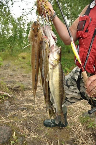 Куйбышевское водохранилище (рыбалка) | активный берш