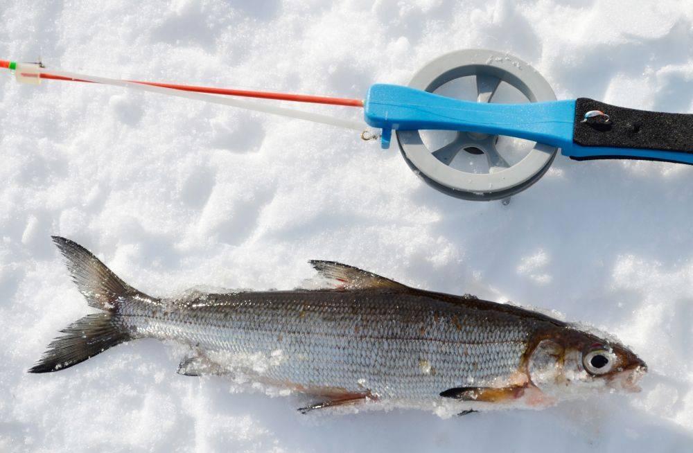 Рыболовный тур на Камчатку. Как все происходит простым «рыбацким» языком.