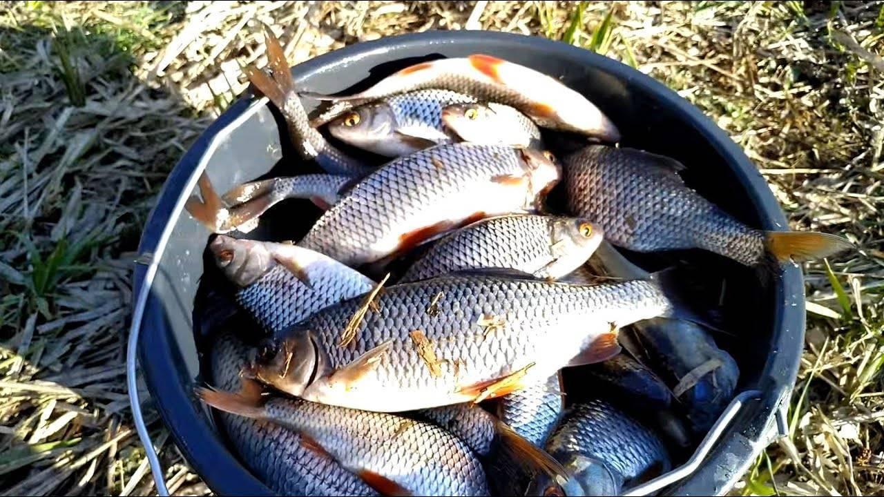 Озеро блесна — рыбалка, отзывы, глубина, фото и видео, отдых, отели рядом, как добраться на туристер.ру