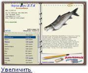 Рыба нельма: описание белорыбицы, видовые различия, как и на что ловить