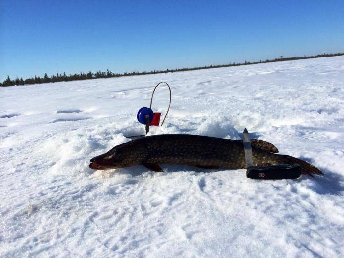Рыбалка в ханты-мансийске: топ мест для трофейной рыбалки