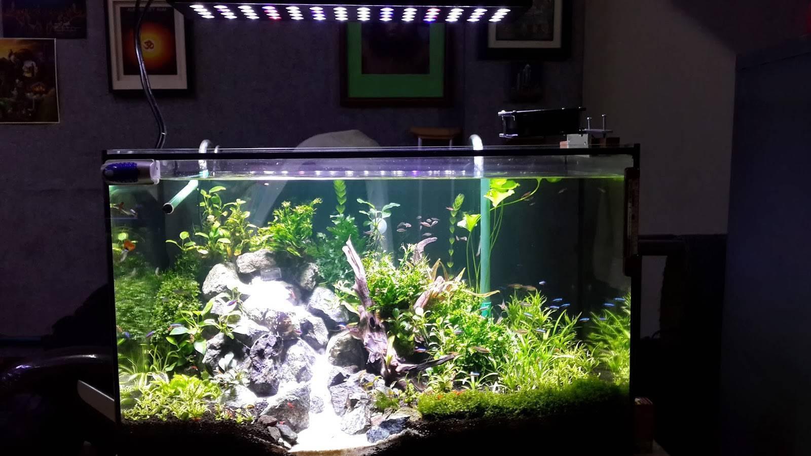 Освещение аквариума: лампы т5 и т8, люминесцентная подводная подсветка для роста растений и другие аквариумные светильники
