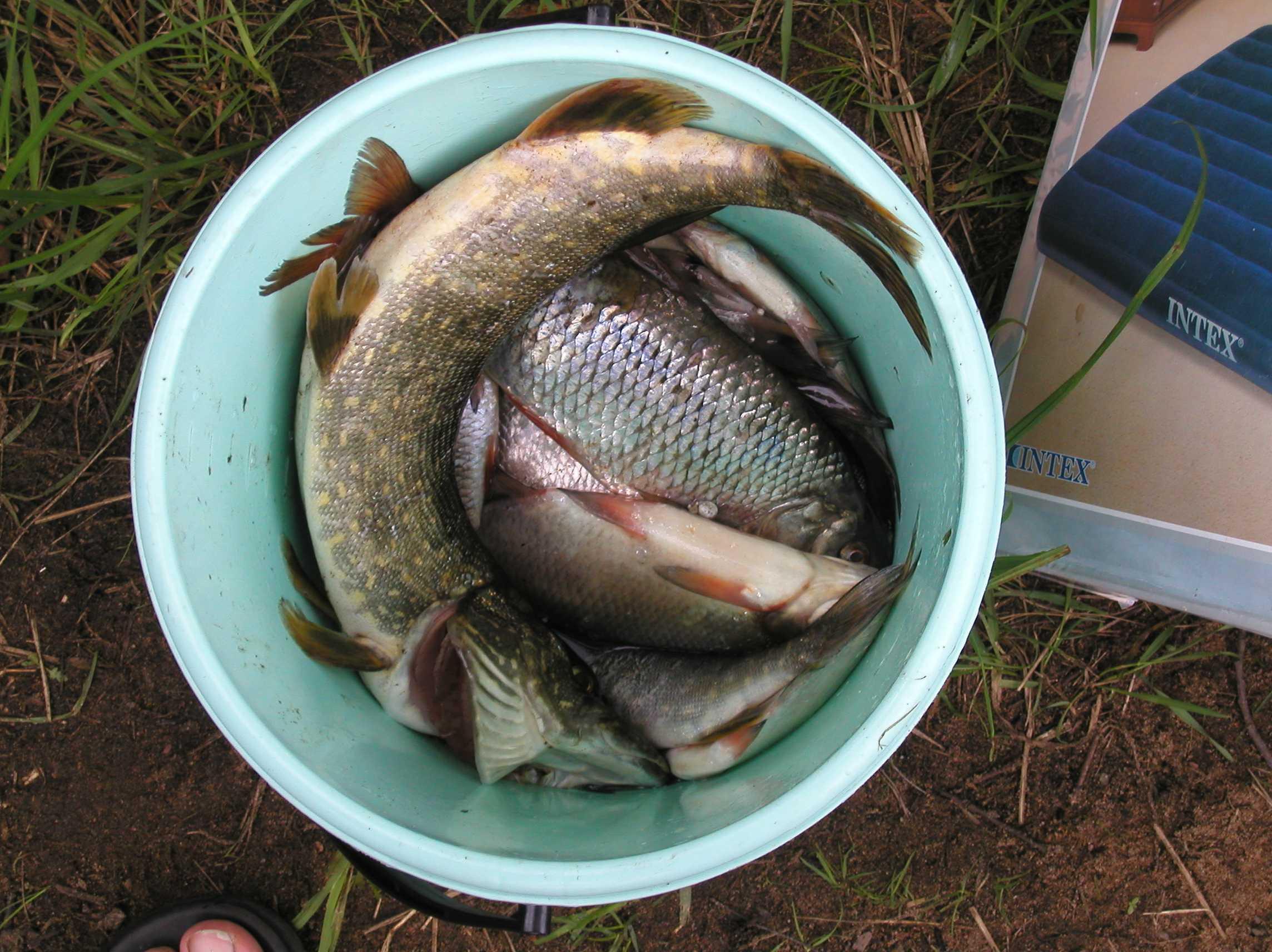 Рыболовные лучшие места в ленинградской области: описание озер, рек, способов ловли