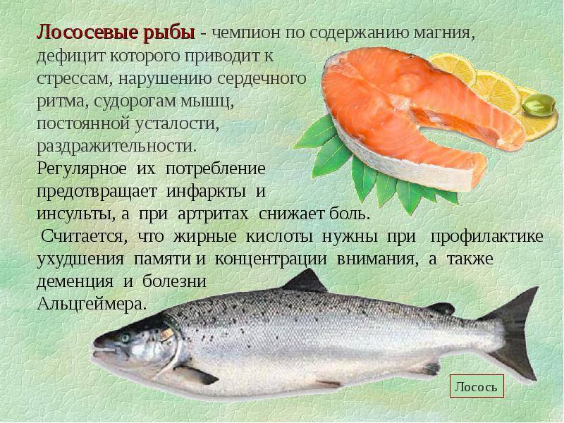 Рыба навага – польза и вред для здоровья
