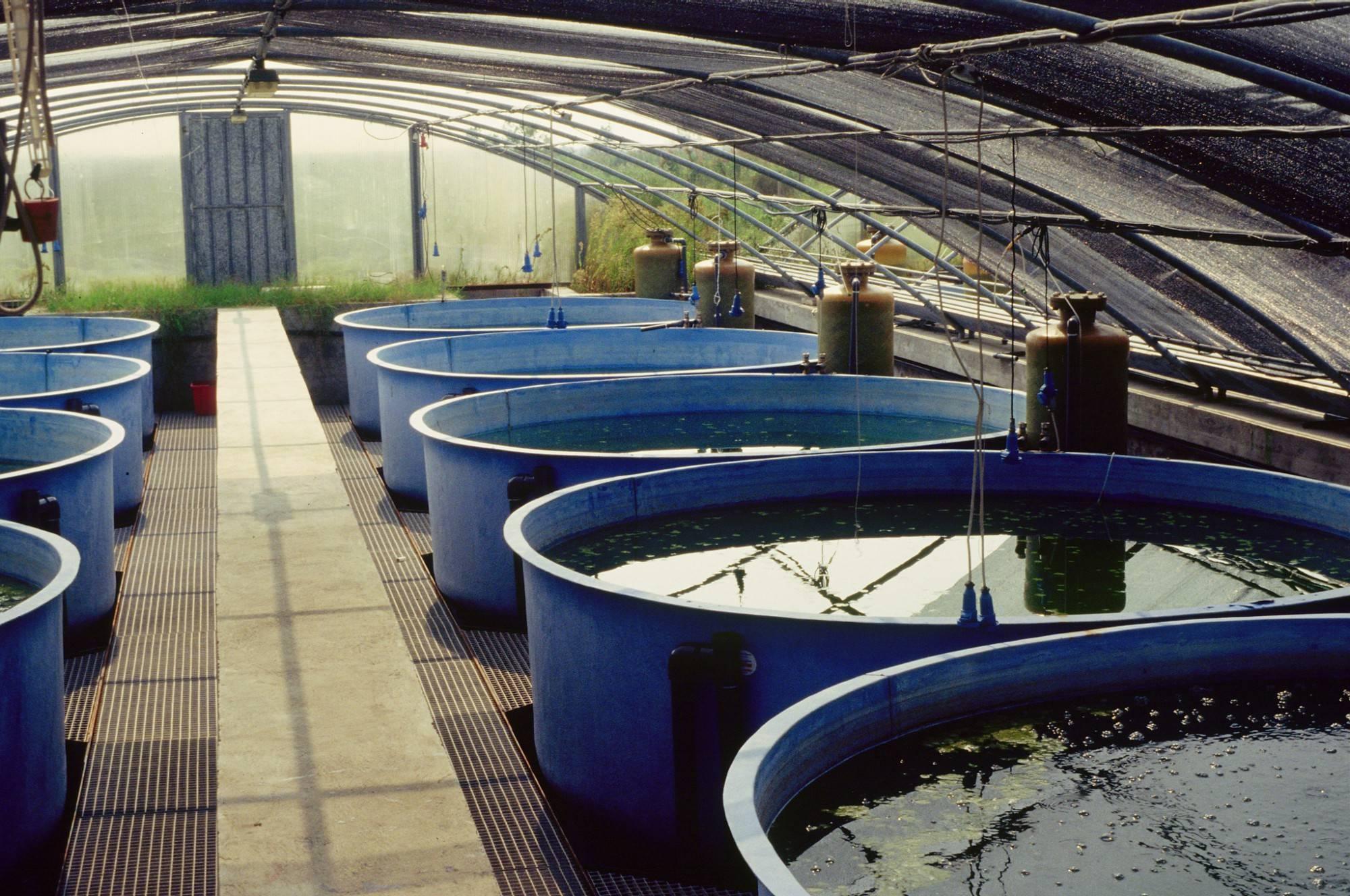 Выращивание форели в бассейнах: как организовать производство и о чем нужно знать