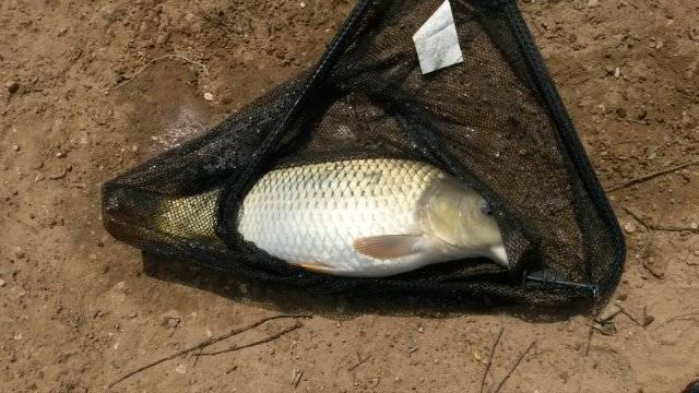 Рыбалка в дятлово клинского района