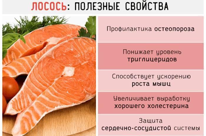 Навага: полезные свойства и калорийность