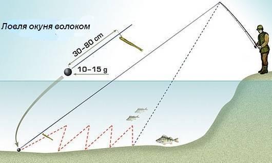 Ловля рыбы чехони на фидер поплавочную удочку снасти на чехонь фото и видео